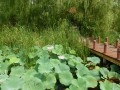 微山湖湿地公园,微山湖湿地公园旅游攻略,微山湖湿地公园旅游景点