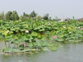 运河湿地公园,运河湿地公园旅游攻